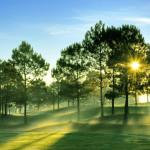 Đà Lạt thơ mộng và yên bình