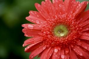 Bông hoa được tắm mát sau cơn mưa