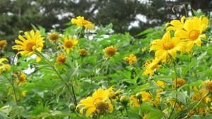 Hoa Đà Lạt mùa mưa