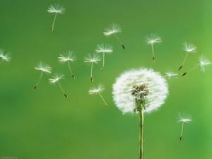 Cánh hoa bay trong gió